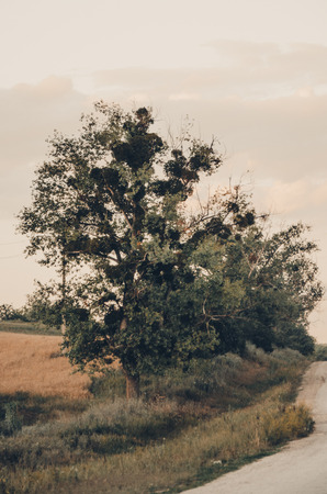 a tree growing next to the road in spring or summer season concept. Green grass and tree leaves. Nature landscape of a plant outdoors close up view Stockfoto - 123252784