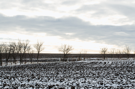 naked trees are on the field in winter season outdoors. Blue sky landscape is on the backgroond. Black ground is covered with snow.