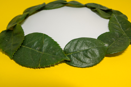 round frame of green leaves with white copy space inside. Petal composition and moke up on yellow background. Banco de Imagens