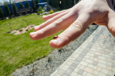 ladybug sitting on the palm finger concept. Ladybug crawling on the hand of the man. Nature and insects background.