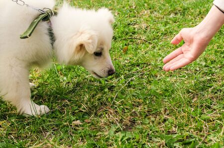 a hand and dogs face on green grass background. hungry puppy wants food