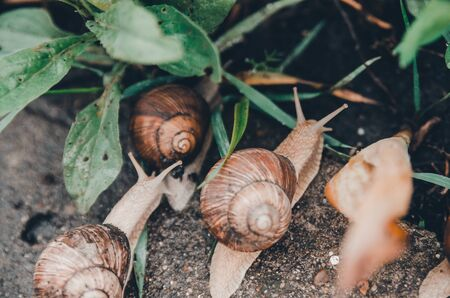 snails coming out from the green grass in rainy weather concept Banco de Imagens