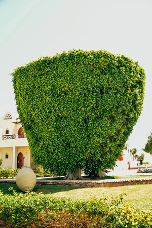 Geometry shaped tree in square form. landscape design in the Egypt hotel garden