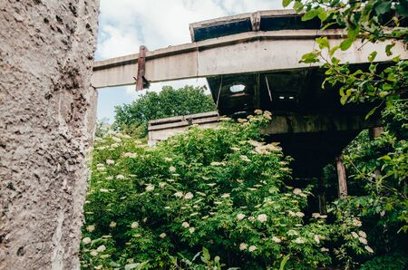 abandoned territory with green plants and old buildings