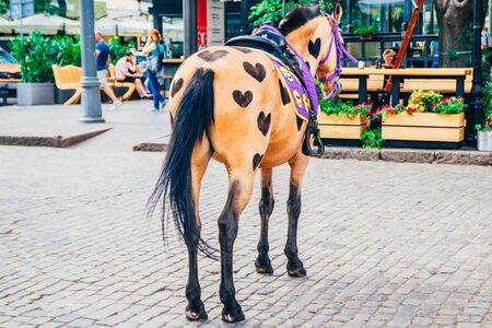brown horse with hearts shaved on her torso. horse on the street for riding tourists Stock Photo