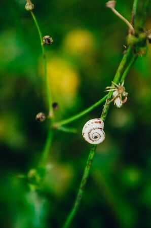 close up view of little white snail on a blade of grass