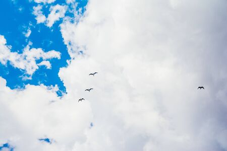 flying stork on blue sky with white clouds background Reklamní fotografie