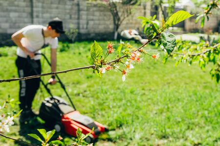 a man cutting grass with red lawn mower. working on the back yard concept. 免版税图像