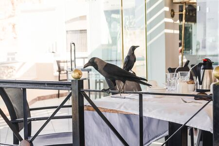 two crows on the table of restaurant terrace. birds stealing food. limitations of outdoors restaurants Reklamní fotografie
