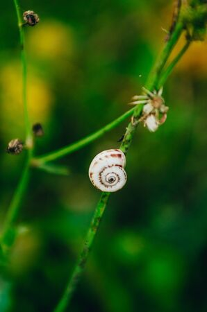 close up view of little white snail on a blade of grass Imagens - 134195341