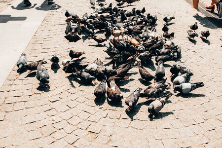 pigeons eating grains on the street. selective focus Imagens