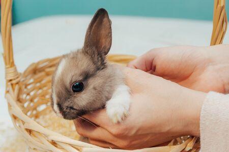 little bunny in wicker basket close up