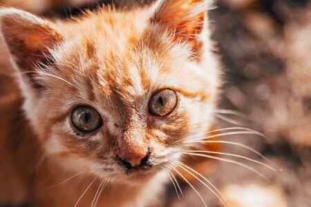 cute orange kitten on autumn leaves background Imagens