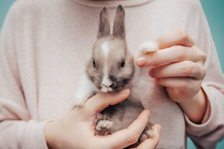 girl holding grey small bunny. home pet close up