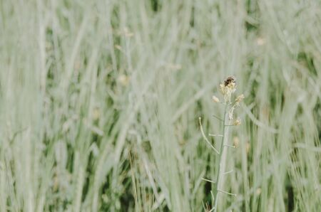 macro view of green grass with a bee Imagens