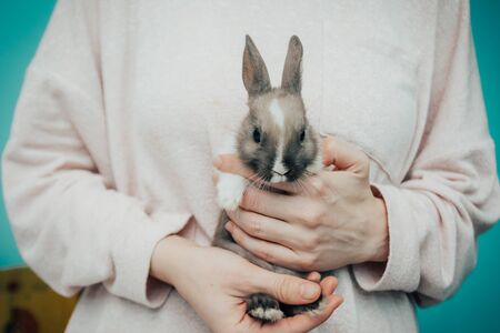 girl holding grey small bunny. home pet close up Stock Photo - 138029564