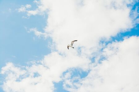 flying stork on blue sky with white clouds background . selective focus