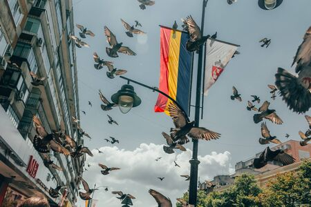 flock of doves take off in the center of a romanian city .  selective focus