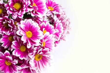 Bouquet of gerbera on the white background Фото со стока