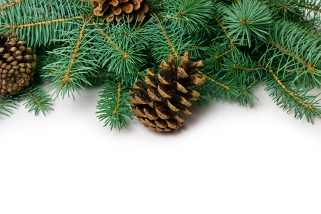 Pine cones and fir-tree on white,close-up 免版税图像