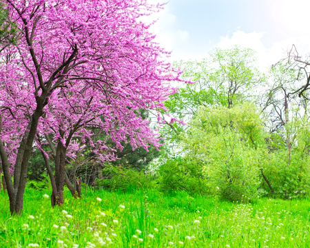 Spring beautiful landscape Stock Photo