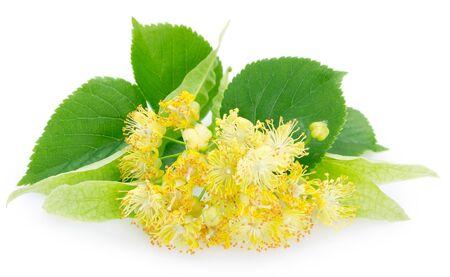 flower of linden isolated on white background Stock Photo