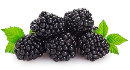 fresh blackberry isolated on white background closeup
