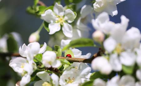 beetle: beetle Stock Photo
