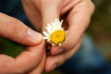 tell fortunes: Loves Me... Loves Me Not... Plucking the petals of flowers to answer the question.