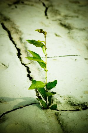 Green plant growing from cracked earth Stock Photo