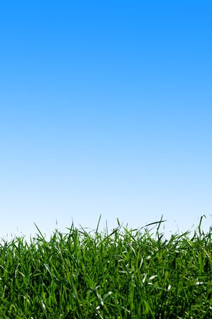 grass area: Green field on white background Stock Photo