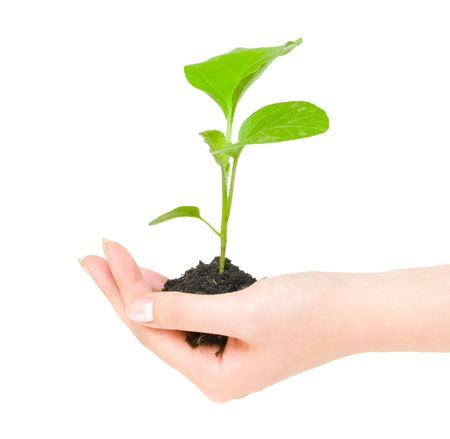 Growing green plant in a hand isolated on white background photo