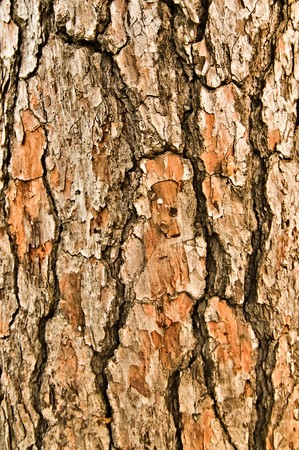 Close up view of wood. Good natural background photo