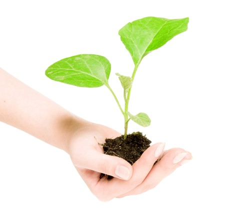 Growing green plant in a hand isolated on white background Stock Photo - 4317378