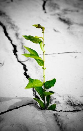 Green plant growing from cracked earth Stock Photo - 4743653