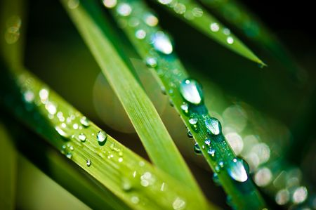 Close-up of fresh green straws with water drops  photo