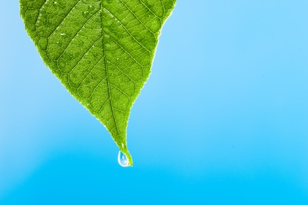 Green leaf with water droplet over water  Stock Photo - 8831128