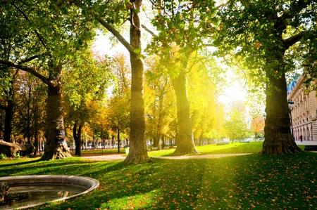 Lage zon in groen park gieten lange schaduwen instellen