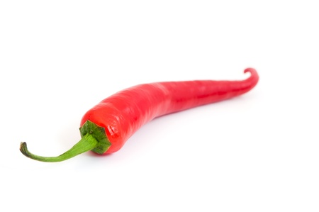 red chilli pepper plant: red hot chili pepper  Stock Photo