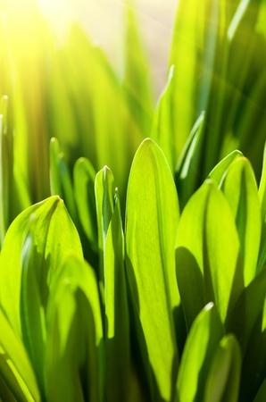 Fresh green grass (shallow DoF) Stock Photo - 9612830