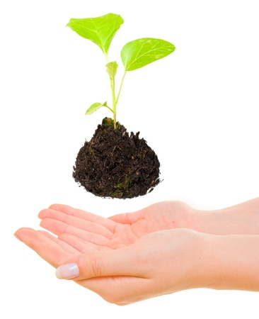 Growing green plant above hands Stock Photo - 12913702