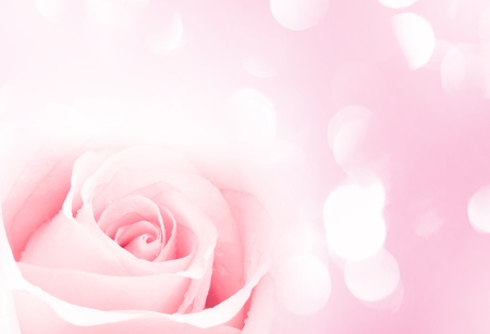pink rose with pink lights in the background  Stock Photo