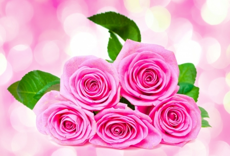 five petals: bouquet of beautiful pink roses  with pink lights in the background