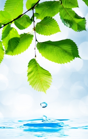 Green leaf with water droplet over water reflection Stock Photo - 14305479