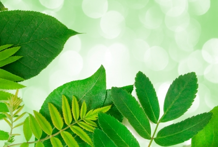 fresh green leaves border with lights in the background  photo