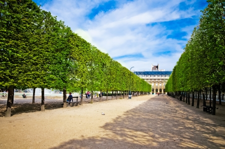 sculpted: Sculpted trees alley in the garden of Palais Royal in Paris