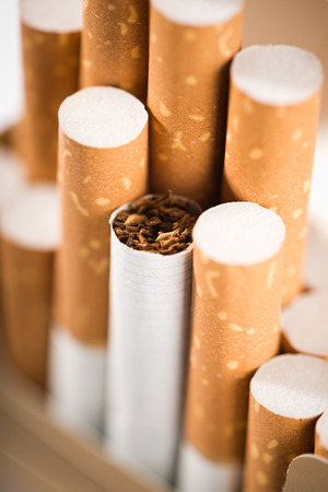 Tobacco in cigarettes with a brown filter close up  photo