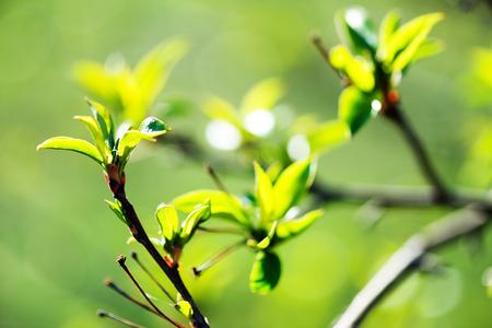 young foliage  photo