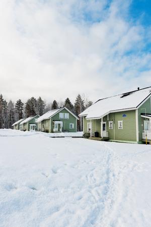 freshly fallen snow: case verdi in una zona naturale coperto di neve appena caduta. Archivio Fotografico