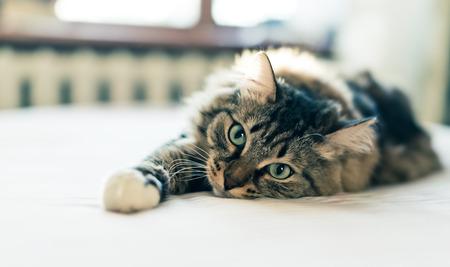 Grey cat lying on bed 스톡 콘텐츠